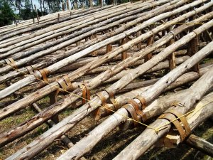 eucalyptus trusses - joining