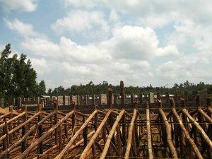 eucalyptus trusses
