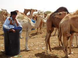 eastern outskirts of Nouakchott and camel market